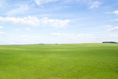 Green grass hills under midday sun in blue sky. Forest in the distance Royalty Free Stock Images