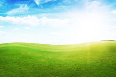 Green grass hills under midday sun in blue sky. Forest in the distance Royalty Free Stock Image