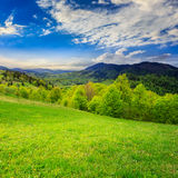 Green grass on hillside meadow in mountain. Summer landscape. green grass on  hillside meadow. forest in fog on the mountain Royalty Free Stock Photography