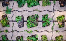 Green grass in  holes of paving blocks. background, pattern Stock Photo