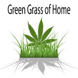 Green Grass of Home Royalty Free Stock Image