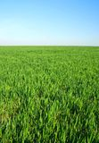 Green grass on horizon Royalty Free Stock Image