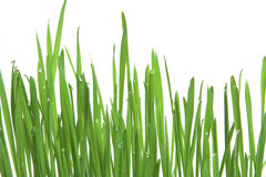 Green grass, horizontal format Royalty Free Stock Photography