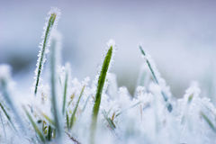 Green grass with ice Stock Photos