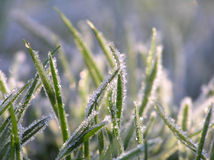 Green grass with ice crystals Royalty Free Stock Photos