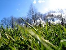 Green Grass II. Green grass - blue sky and trees in the background royalty free stock photo