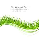 Green grass illustrate. With copy space stock illustration