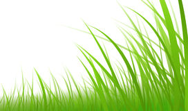 Green-grass-illustration Stock Photo