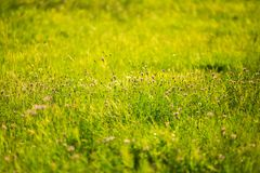 Green Grass Image Royalty Free Stock Photo