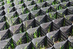 Free Green Grass In A Plastic Black Honeycomb Frame To Prevent Soil Erosion Royalty Free Stock Photography - 136371557