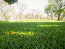 Free Green Grass In The Park Stock Photos - 51059453