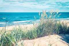 Free Green Grass In The Sand Dune At The Baltic Sea Royalty Free Stock Images - 131501709