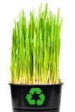 Green grass isilateg on white. macro Royalty Free Stock Photography