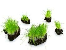 Green grass islands Royalty Free Stock Photos