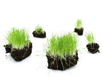 Green grass islands Stock Photos