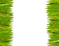 Green grass isolate. For background Stock Images