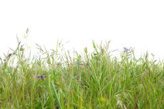 Green grass isolated royalty free stock photography