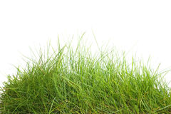 Green grass isolated Royalty Free Stock Photos