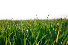 Green grass isolated stock photos