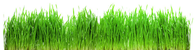 Green grass isolated Stock Images
