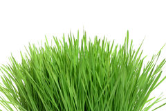 Green grass isolated. Natural, bio royalty free stock photo
