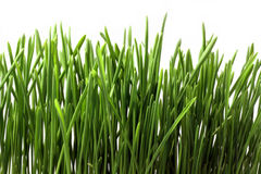 Free Green Grass Isolated Stock Image - 3724351