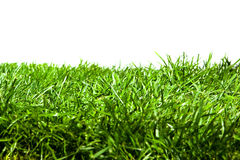 Green grass Isolated Stock Image