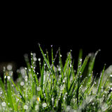 Green grass isolated on black background Stock Image