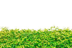 Green grass isolated border for background Stock Image