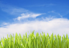 Green grass isolated with clipping path Royalty Free Stock Photos