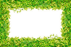 Green grass isolated frame for background Stock Images