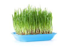 Green grass. Isolated Royalty Free Stock Image
