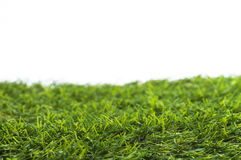 Green grass isolated. Image shows green grass isolated on white background stock photo