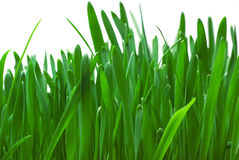 Green grass isolated on white Royalty Free Stock Photo