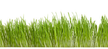 Green grass isolated on white Stock Photos