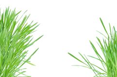 Green grass isolated on the white royalty free stock images