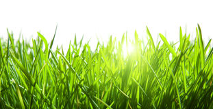 Green grass isolated Royalty Free Stock Image