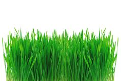 Green grass isolated on white Royalty Free Stock Photos
