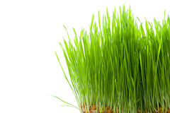 Green Grass isolated on white Royalty Free Stock Images