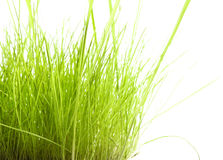 Green Grass isolated on white Stock Photography