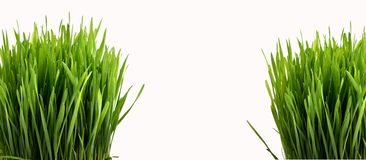 Green grass. Isolated on white Royalty Free Stock Photography