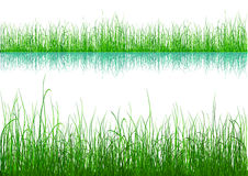Green Grass - isolated on white Royalty Free Stock Images