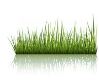 Green Grass Isolated On White royalty free illustration