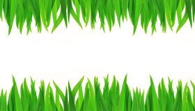 Green grass isolated on a white background Stock Image