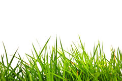 Green grass. Isolated on white background Stock Photos