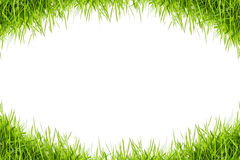 Green grass isolated on white background Royalty Free Stock Photo