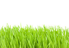 Green grass isolated on white. Background stock photos