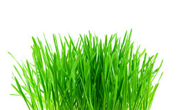 Green grass isolated on white Stock Photo