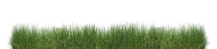 Green grass isolated. Green grass isolated on a white background royalty free stock photography