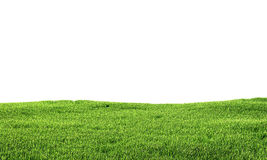 Green grass isolated on white background. 3d illustration Royalty Free Stock Image